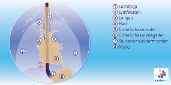 Vooraanzicht van de anatomie van de slokdarm en omliggende organen