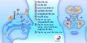 Anatomie van het voor- en zij aanzicht van de neus en holtes